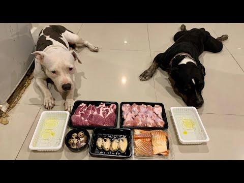 Pit Bulls eat RAW NZ Green Lipped Mussel, Pork Shoulder Steak combo [ASMR] | BARF | MUKBANG   4K