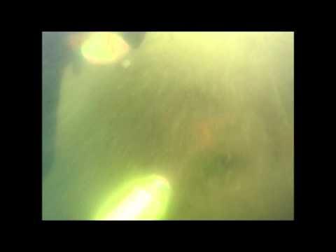 Oak Beach 8-16-12 New York Diving