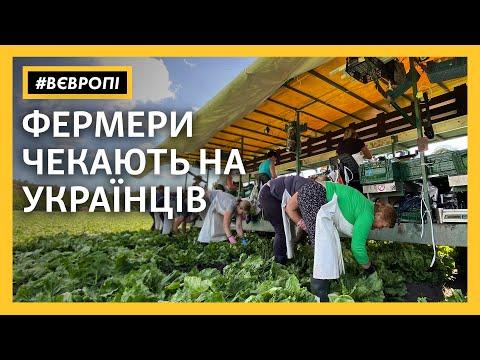 «Без українців буде катастрофа» – чеські фермери чекають на заробітчан   #ВЄвропі