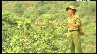 Trên đỉnh Trường Sơn ta hát - Tuấn Anh