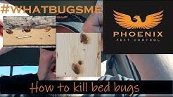 How to kill bed bugs DIY #whatbugsme Phoenix Pest Control TN