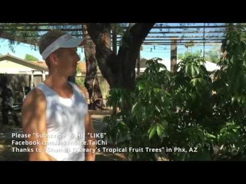How to Plant a Lychee Tree in Phoenix, Arizona - Soil, Water, Sun, Food, Mulch!