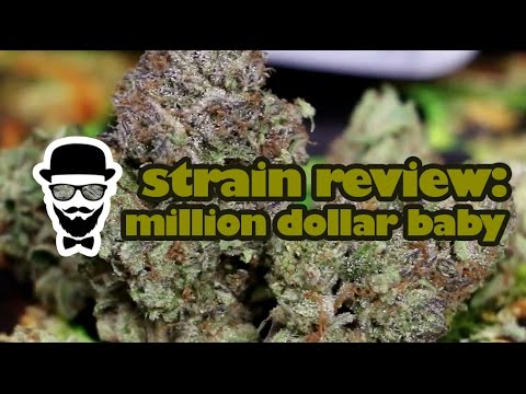 Strain Review: Million Dollar Baby (Medizin) - YoungFashioned.com