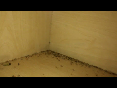 Bad German Cockroach Infestation! - NaturZone Pest Control - Phoenix Scottsdale Area Pest Control