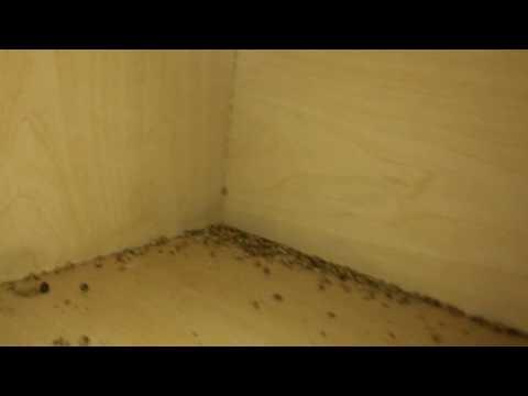 Bad German Cockroach Infestation! - NaturZone Pest Control - Phoenix Scottsdale Area Pest Control