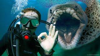 메갈로돈보다 더 무서운 18가지 바다 괴물