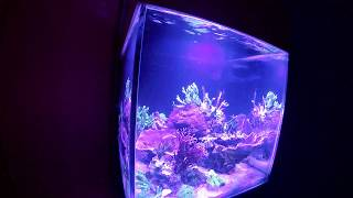 148l SPS reef tank -day 170