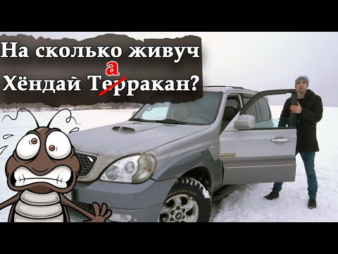 Хендай Терракан 2.9 Таракан в дикой природе.  Hyundai Terracan 2.9