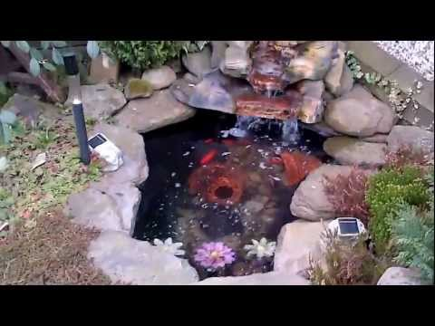 My Garden Pond With Fishmate 15000 Uv Filter