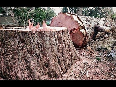 Женщина из зависти срубила деревья соседей и поплатилась за это. Месть вышла такой мощной!