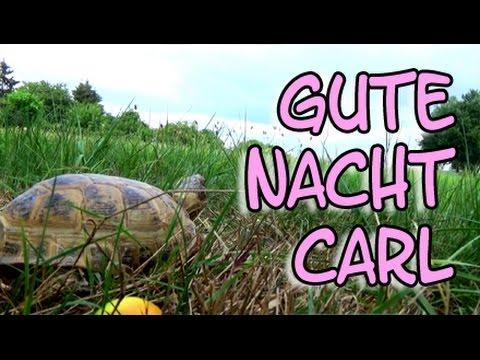 Tiervideo Gute Nacht Carlchen Schildkrote Carl Geht In