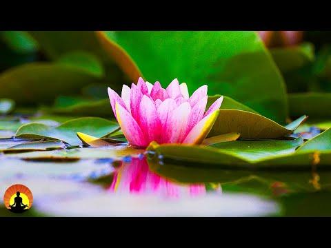 🔴 Relaxing  247 Meditation Healing Sleep  Yoga Spa Calming  Relax Study