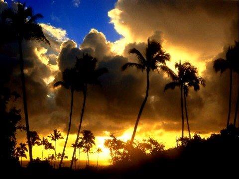 Neil Young Hawaiian Sunrise RARE UNRELEASED