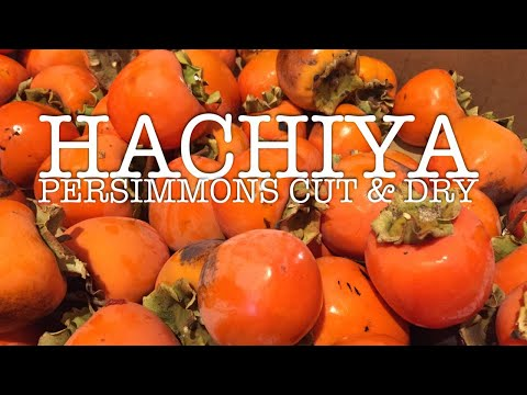 Drying Persimmons • Easy & Healthy