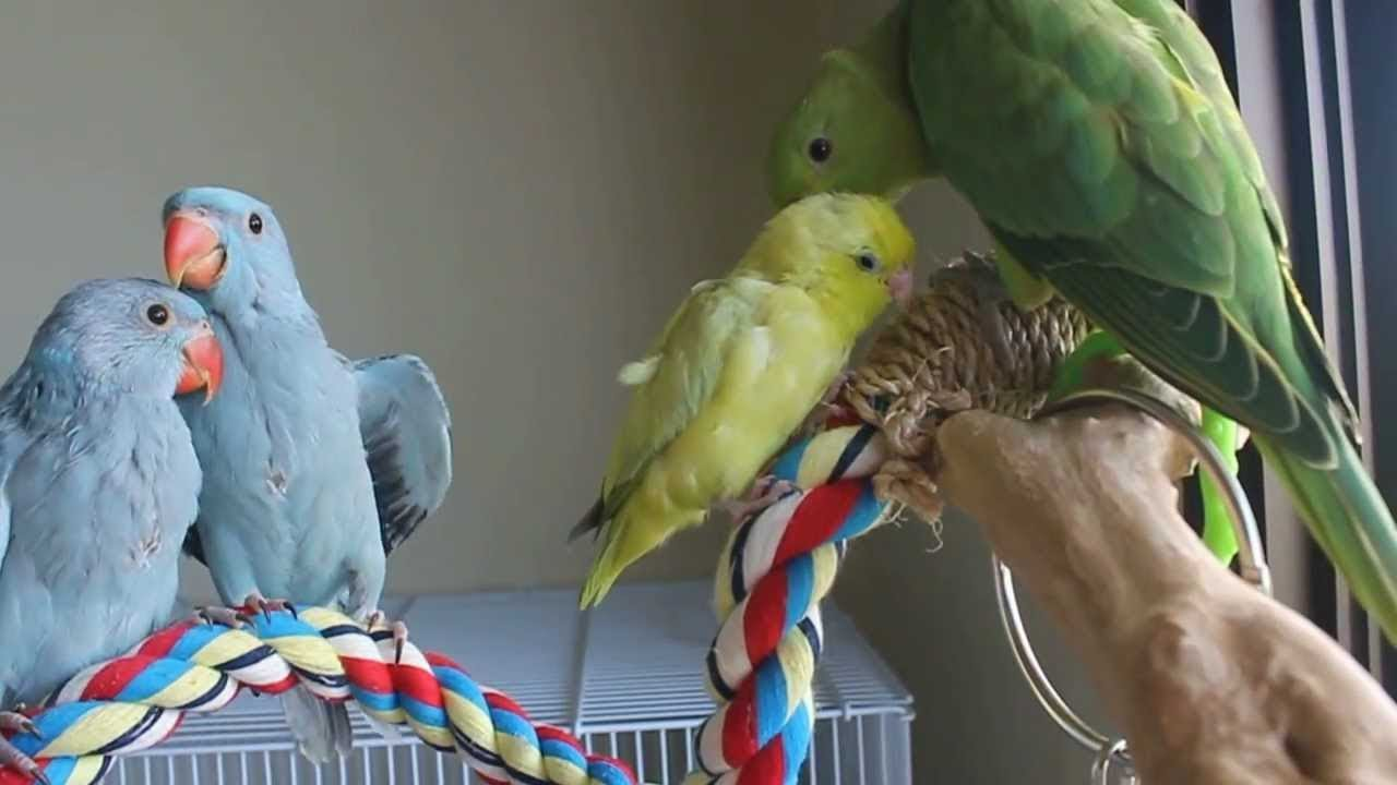 Funny Parrots and Cute Birds Bathing Together | Best Money Ever Spent on Birds |