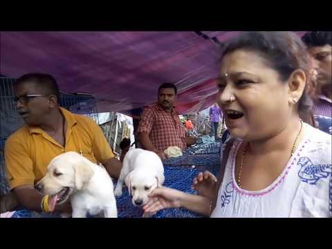 Galiff Street Puppy Bazar Complete Pt 1 l Galiff Street Pet Market Kolkata