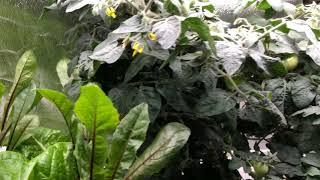 가정용수경재배기 토마토키우기 수경재배