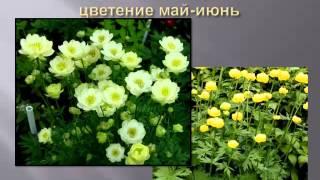 Многолетники в саду(Видеолекция для садоводов в Новосибирске 24 января 2015 года., 2015-01-25T07:54:36.000Z)