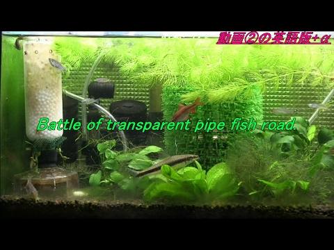 """Battle of transparent pipe fish road【Cr'sAqua】""""Fish Tank"""" ②・《Crimaron Aquarium》熱帯魚水槽 (13)"""