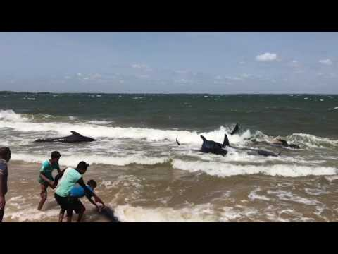 Whales came to beach