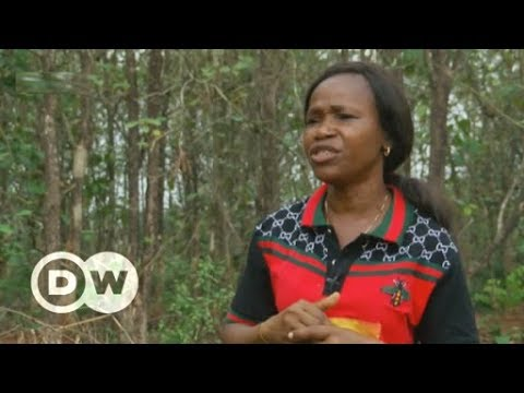 Reforesting Nigeria before it's too late | DW English