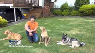 Jessi May - Experience with Doggy Dan Online Dog Training - Jessi May