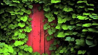 Wisdom of the Heart ☮ Tao & Zen, 2012