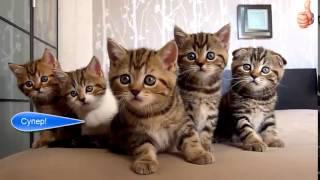 офигенно милые котята играют друг с другом