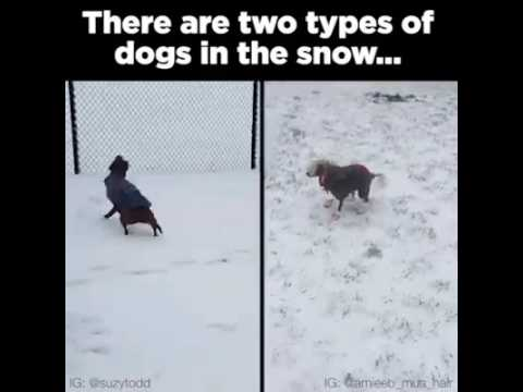 Two Types Of Dogs In The Snow Youtube
