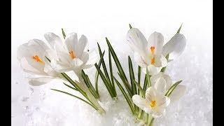 Весна пришла! - Frühling ist da!