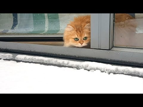 CAT TALKING TO SNOW   WHY?