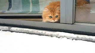 CAT TALKING TO SNOW | WHY?