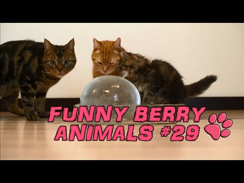 Cute cats, dogs (smart cats) Funny cats 2015 || Funny Berry Animals #29