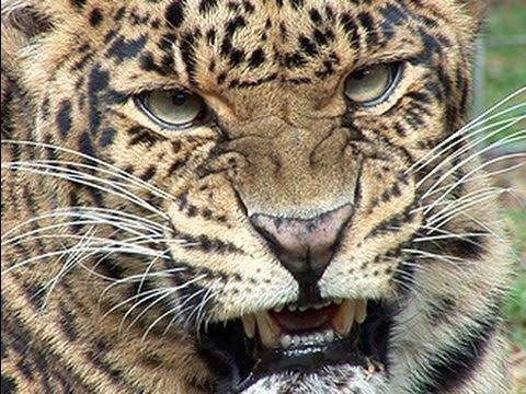 How to Flea Treat 100+ BIG CATS !!