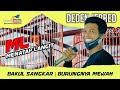 Wow Bakul Sangkar Punya Murai Mewah Bernama  Ml  Mp3 - Mp4 Download