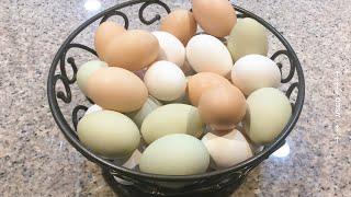 Download Mp3 Comida Para Que Las Gallinas Pongan Huevos Si No Tienes Gallos.