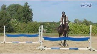 Springgymnastik für das 5-jährige Pferd | Ingrid Klimke