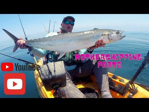 Mothershipping Part 2! ((Huge Kayak Kingfish))
