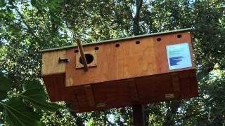 Port Of Stockton: Barn Owl Nest Boxes