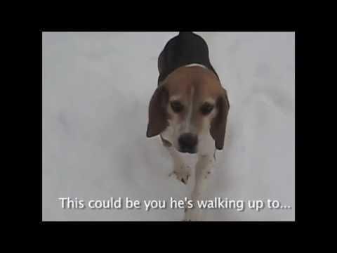 Dog Adoption & Rescue WNY (Buffalo)