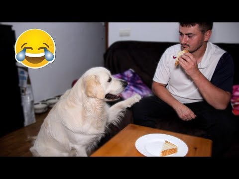 What does My Dog do when I Eat Sandwich - Bailey Steals Food