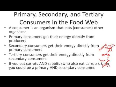 Primary, Secondary, and Tertiary Consumers in the Food Web