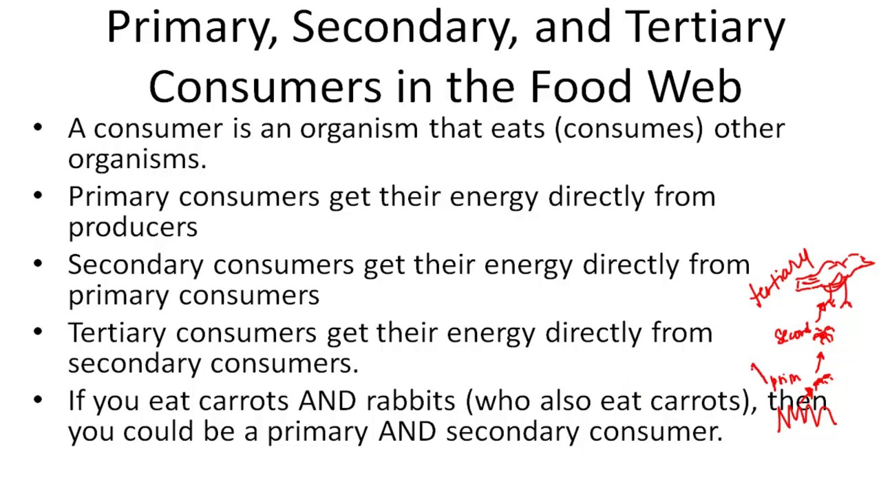 Primary Secondary And Tertiary Consumers In The Food Web Youtube