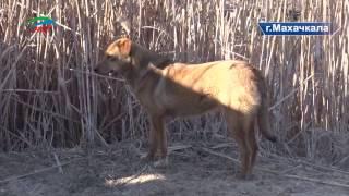 В Махачкале собаки насмерть загрызли девятилетнюю девочку