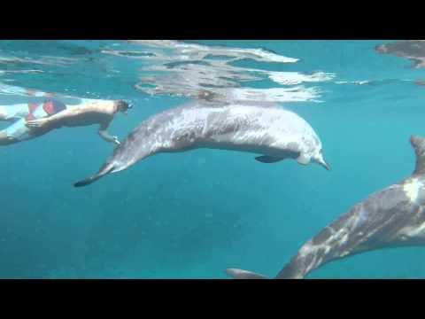 Dolphin mating Human | Doovi  Dolphin mating ...