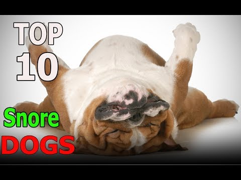 Top 10 Dog Breeds that Snore | Top 10 animals