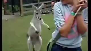 Смешные Нарезки про Животных