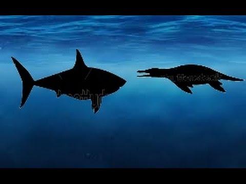 Liopleurodon Vs Megalodon