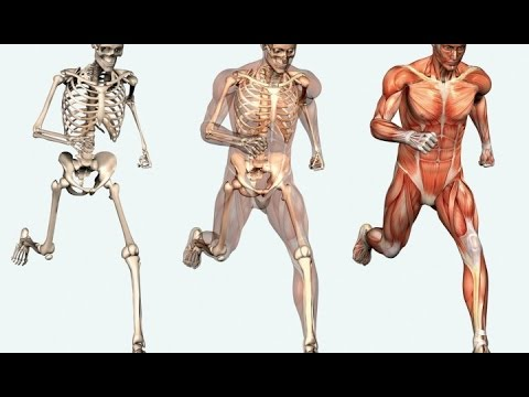 Human anatomy skeleton anatomygross anatomy in urduhindi human anatomy skeleton anatomygross anatomy in urduhindi osteology in urdu hindi lec 01 ccuart Images