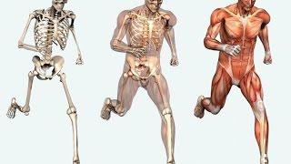 HUMAN ANATOMY [SKELETON  ANATOMY][Gross Anatomy in Urdu/Hindi]-Osteology IN URDU / HINDI LEC 01